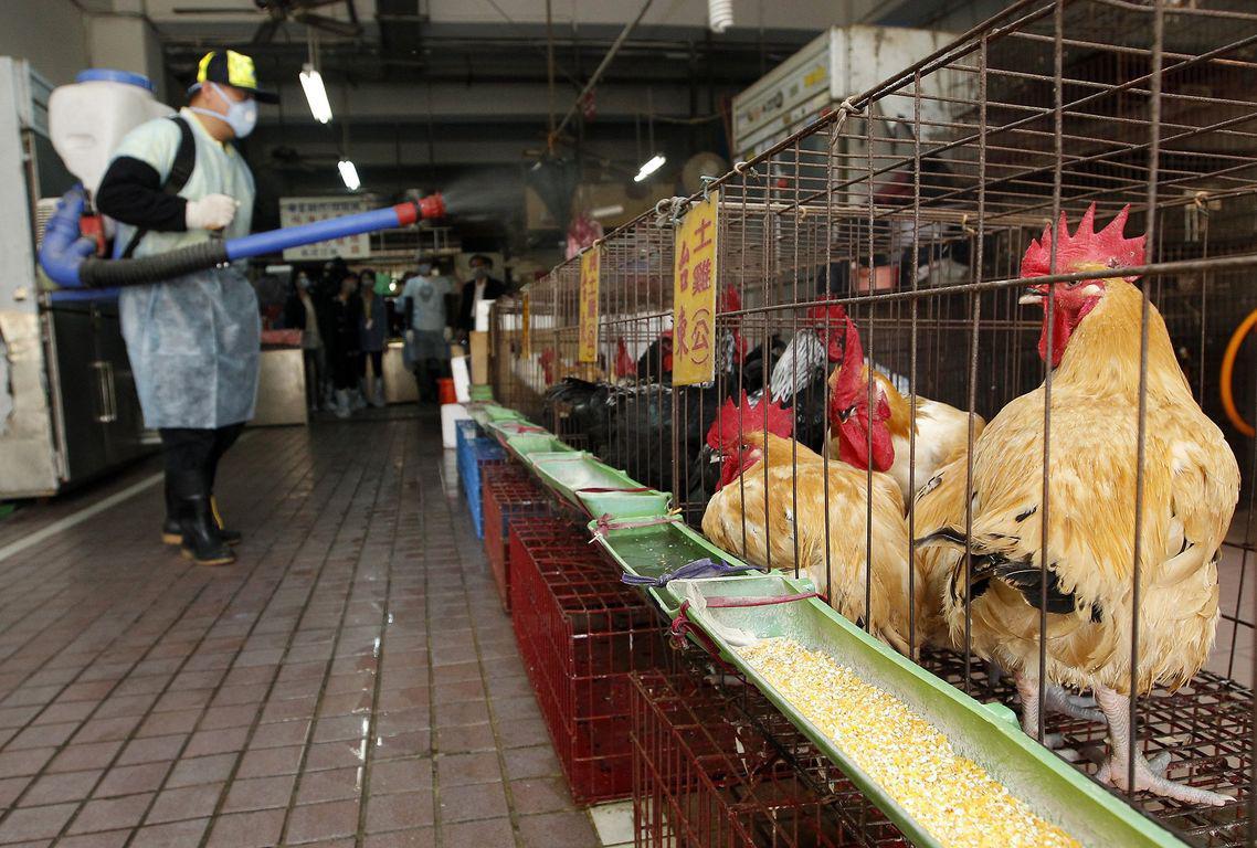 Κίνα: Πρώτο κρούσμα της γρίπης των πτηνών σε άνθρωπο