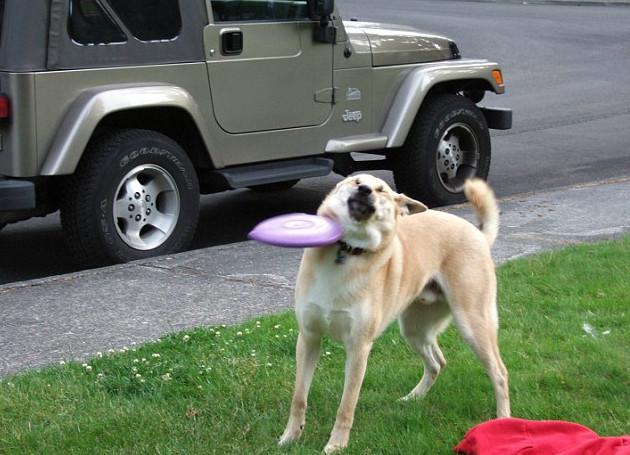 skuloi11-500 Σκύλοι «ιδιοφυίες »: Περήφανοι ιδιοκτήτες μοιράζονται τα μεγαλύτερα... fail των κατοικίδιων τους [εικόνες]