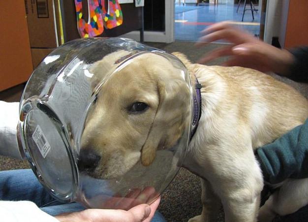 skuloi12-500 Σκύλοι «ιδιοφυίες »: Περήφανοι ιδιοκτήτες μοιράζονται τα μεγαλύτερα... fail των κατοικίδιων τους [εικόνες]
