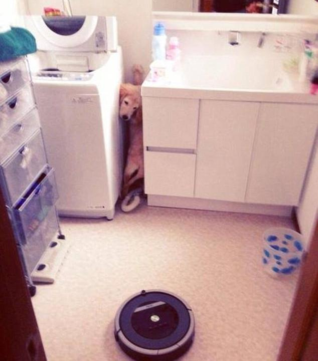 skuloi13-500 Σκύλοι «ιδιοφυίες »: Περήφανοι ιδιοκτήτες μοιράζονται τα μεγαλύτερα... fail των κατοικίδιων τους [εικόνες]