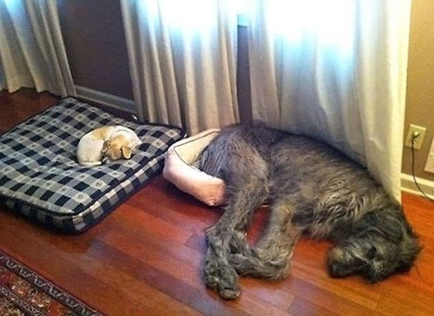 skuloi16-500 Σκύλοι «ιδιοφυίες »: Περήφανοι ιδιοκτήτες μοιράζονται τα μεγαλύτερα... fail των κατοικίδιων τους [εικόνες]