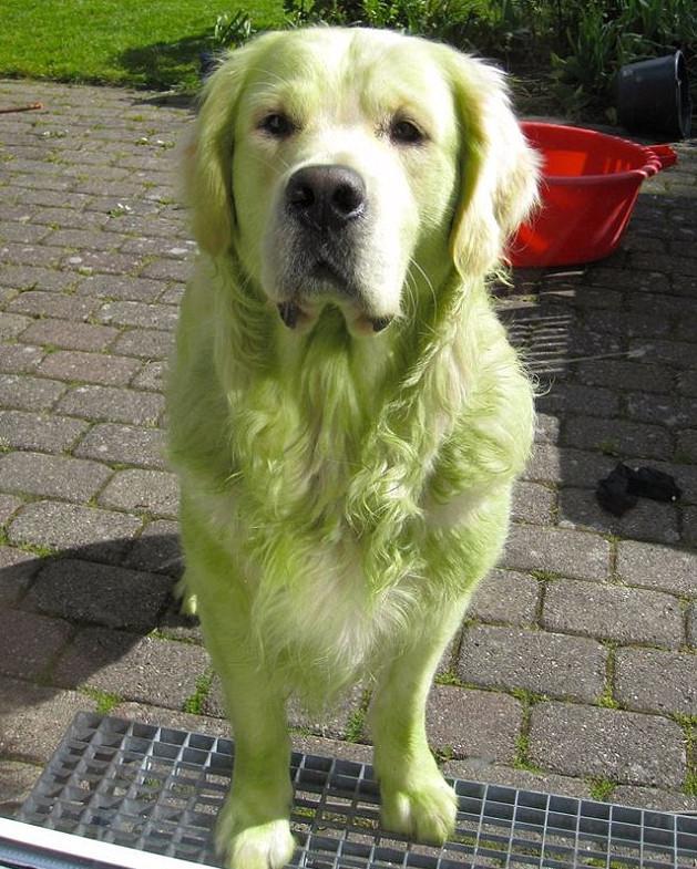skuloi19-500 Σκύλοι «ιδιοφυίες »: Περήφανοι ιδιοκτήτες μοιράζονται τα μεγαλύτερα... fail των κατοικίδιων τους [εικόνες]