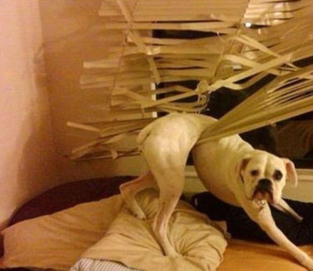 skuloi2-500 Σκύλοι «ιδιοφυίες »: Περήφανοι ιδιοκτήτες μοιράζονται τα μεγαλύτερα... fail των κατοικίδιων τους [εικόνες]