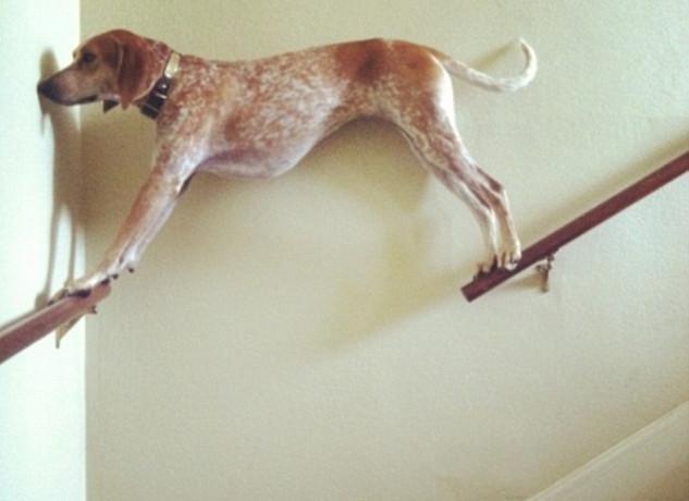 skuloi20-500 Σκύλοι «ιδιοφυίες »: Περήφανοι ιδιοκτήτες μοιράζονται τα μεγαλύτερα... fail των κατοικίδιων τους [εικόνες]