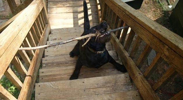 skuloi3-500 Σκύλοι «ιδιοφυίες »: Περήφανοι ιδιοκτήτες μοιράζονται τα μεγαλύτερα... fail των κατοικίδιων τους [εικόνες]