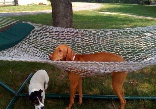 skuloi4-500 Σκύλοι «ιδιοφυίες »: Περήφανοι ιδιοκτήτες μοιράζονται τα μεγαλύτερα... fail των κατοικίδιων τους [εικόνες]