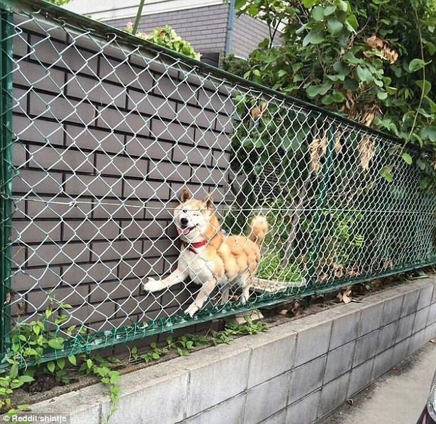 skuloi6-500 Σκύλοι «ιδιοφυίες »: Περήφανοι ιδιοκτήτες μοιράζονται τα μεγαλύτερα... fail των κατοικίδιων τους [εικόνες]