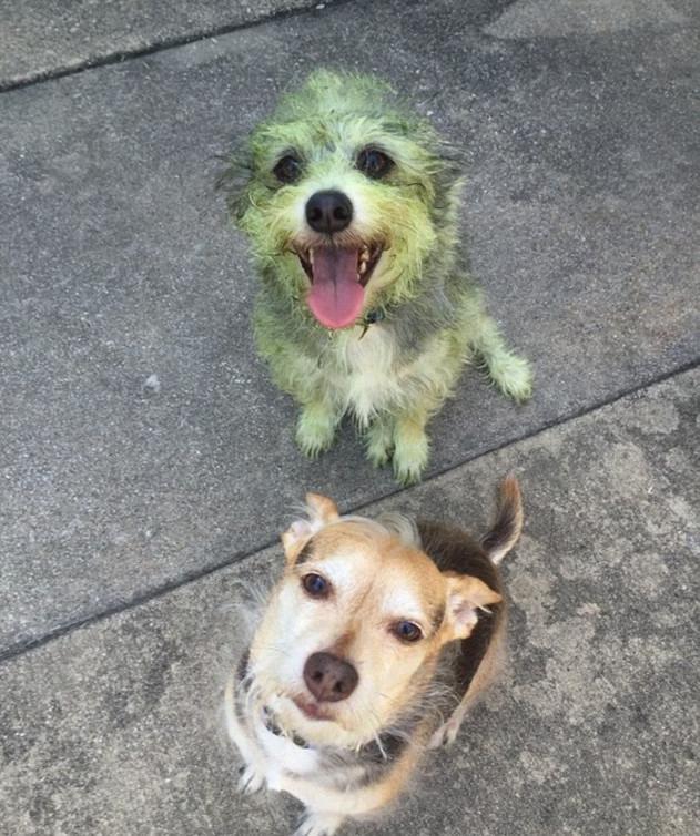 skuloi7-500 Σκύλοι «ιδιοφυίες »: Περήφανοι ιδιοκτήτες μοιράζονται τα μεγαλύτερα... fail των κατοικίδιων τους [εικόνες]