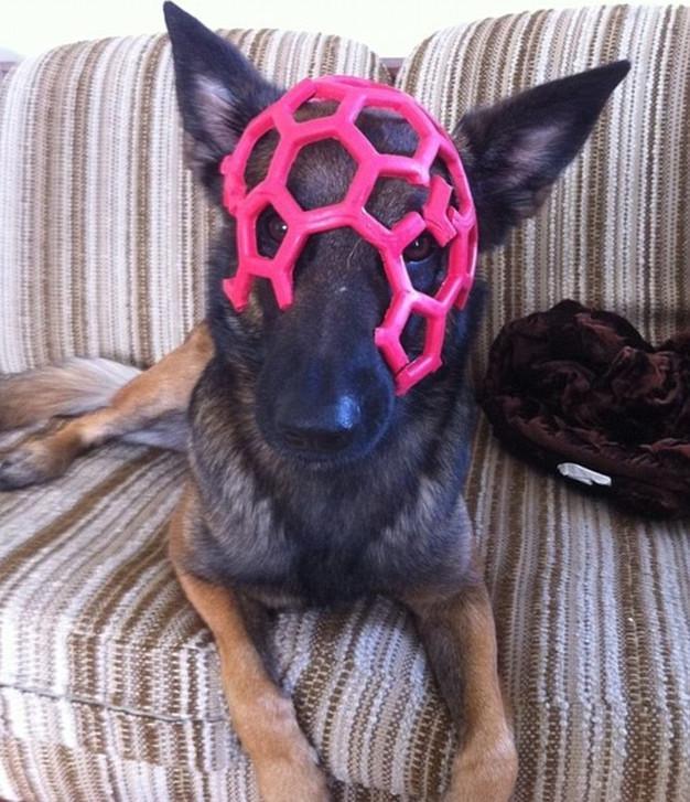 skuloi8-500 Σκύλοι «ιδιοφυίες »: Περήφανοι ιδιοκτήτες μοιράζονται τα μεγαλύτερα... fail των κατοικίδιων τους [εικόνες]