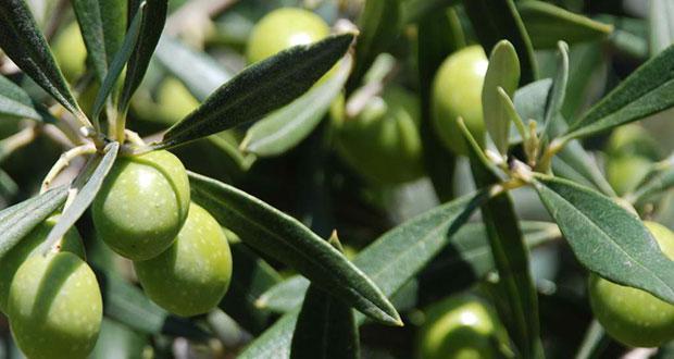 elia Ποια cranberries; Ιδού τα ελληνικά superfoods που πρέπει να τρως