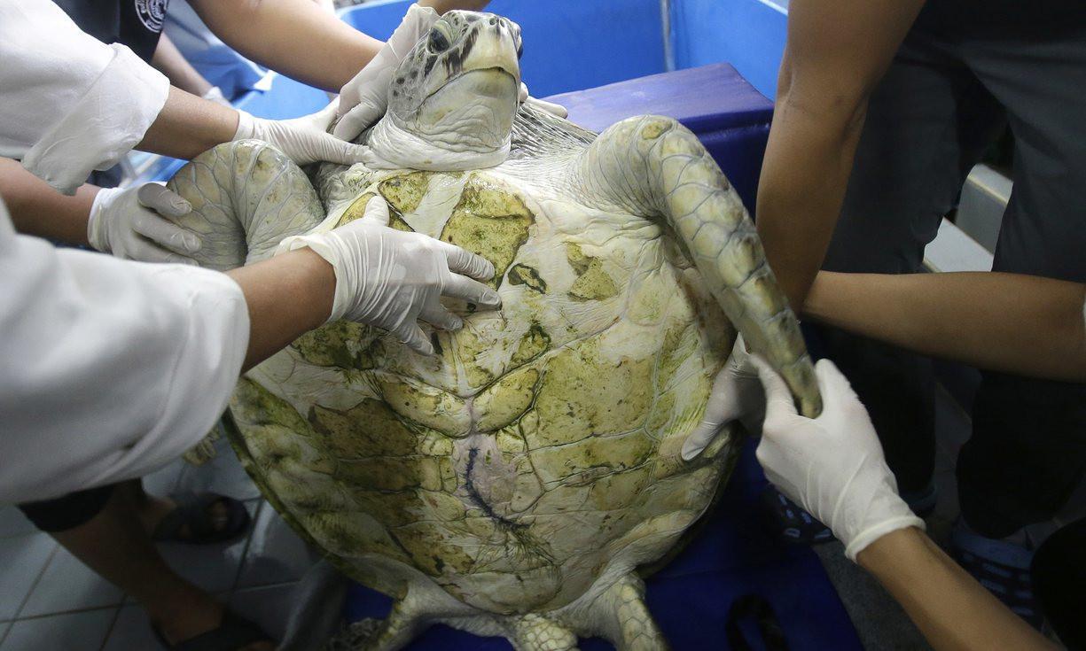 xelona-tailandi-1300 Πέθανε η χελώνα που είχε καταπιεί 915 νομίσματα