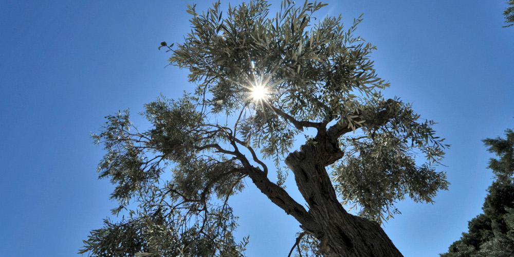 Καιρός: Ζέστη και σήμερα – Βροχές σε Κρήτη και Δωδεκάνησα