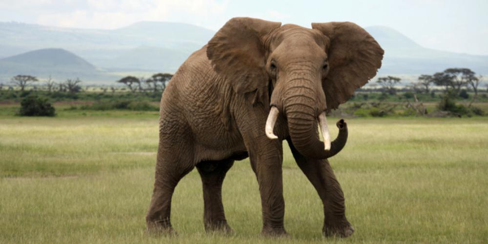 Απίστευτο βίντεο: Ελέφαντες θρηνούν το θάνατο του αρχηγού τους