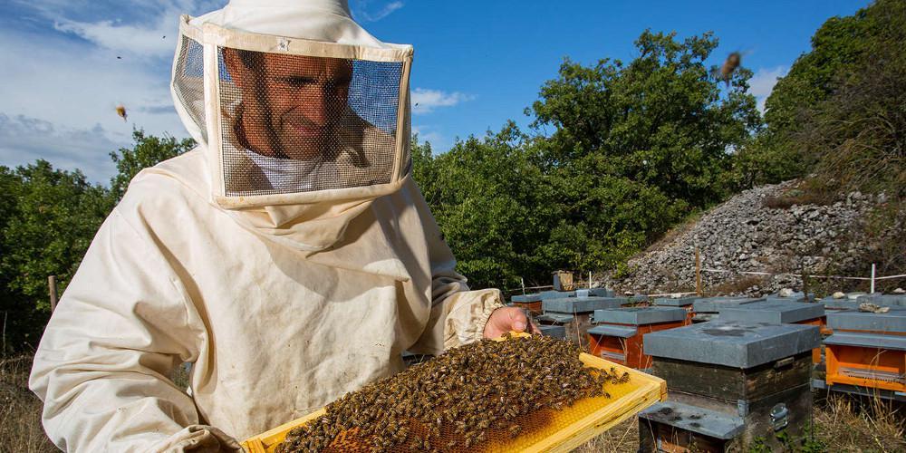 Από τις τράπεζες στα... μελίσσια: Αντιεξουσιαστής εξολόθρευσε 55 εκατ. μέλισσες!
