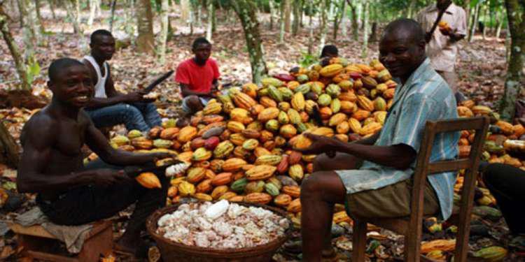 Καλλιεργητές κακαόδεντρων