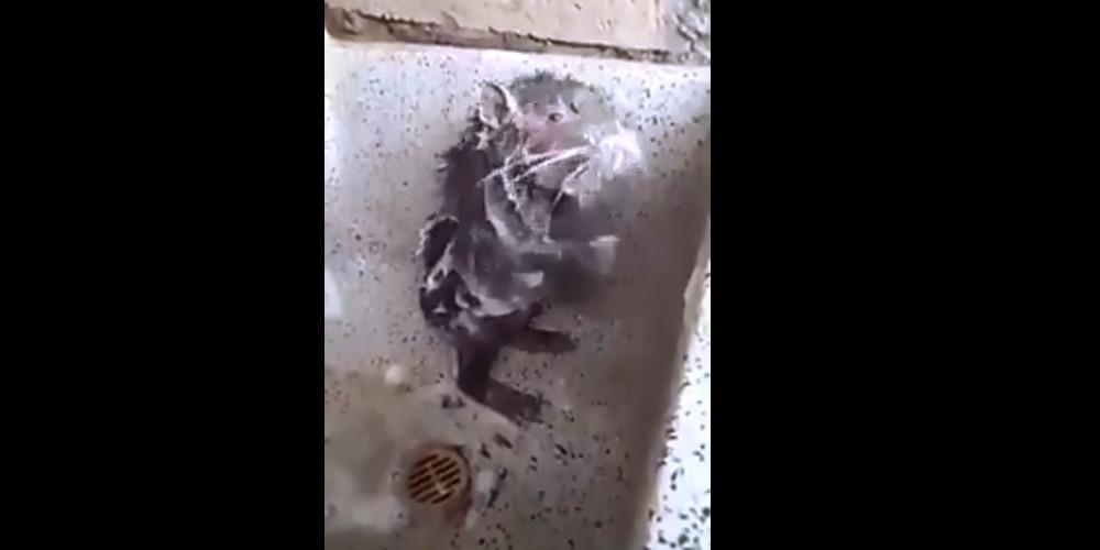 Εκπληκτικό βίντεο: Αρουραίος στέκεται στα δυο του πόδια και κάνει μπάνιο σαν άνθρωπος