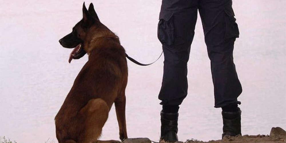 H Vamma έκανε πάλι το θαύμα της - Το νέο κύκλωμα ναρκωτικών που εξάρθρωσε ο αστυνομικός σκύλος