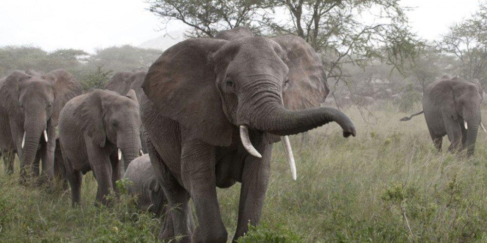 Προειδοποίηση από τους επιστήμονες: Τα μεγάλα ζώα θα εξαφανιστούν!