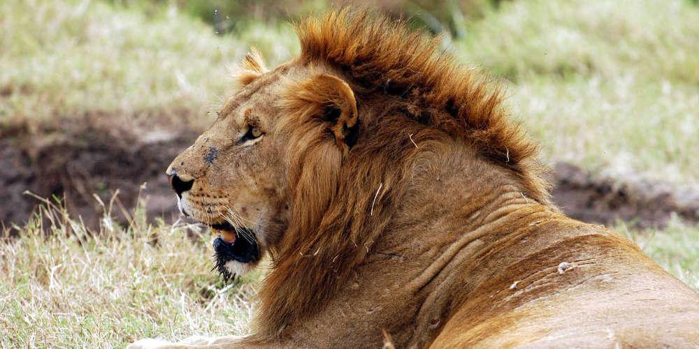 Συναγερμός: 14 λιοντάρια το έσκασαν από το Εθνικό Πάρκο Κρούγκερ