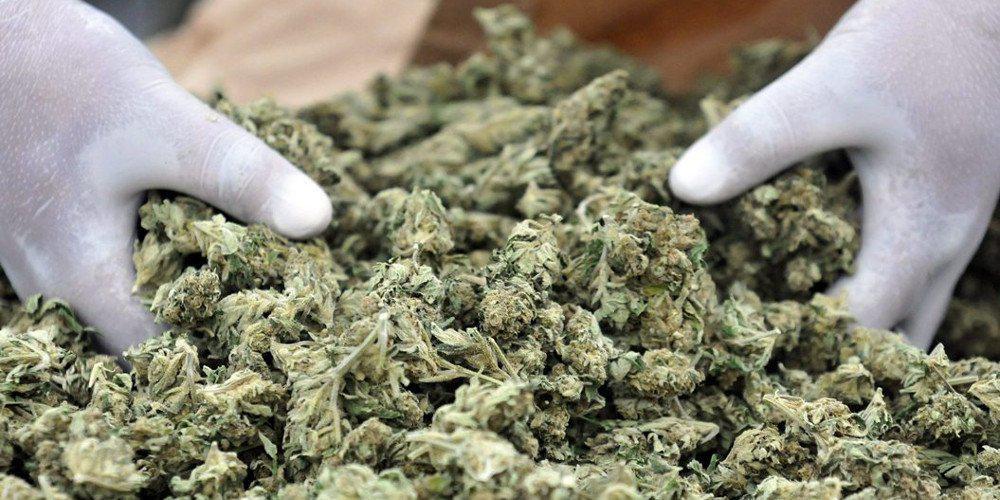 Απίστευτο: Πληρώνεται 50 ευρώ την ώρα για να δοκιμάζει… μαριχουάνα!