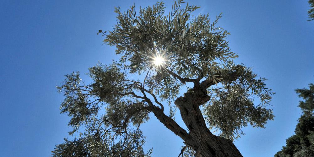 Καιρός: Ηλιοφάνεια και υψηλές θερμοκρασίες του Αγίου Πνεύματος - Πού αναμένονται βροχές