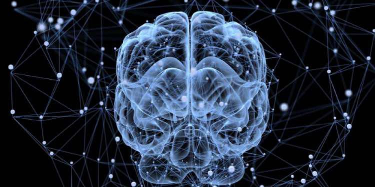 Διαφορά γυναικείο και ανδρικού εγκεφάλου: Πραγματικότητα ή μύθος;