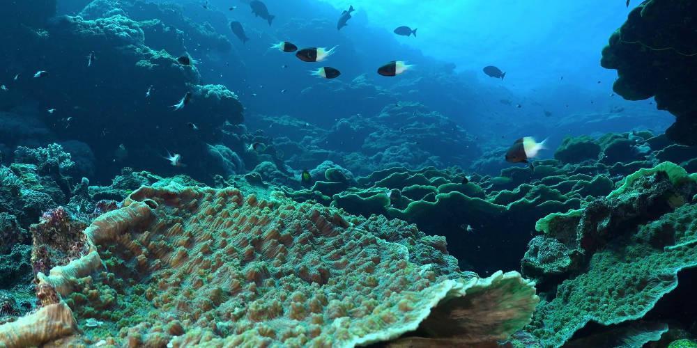 Κήπος από κοράλλια 2 χιλιόμετρα κάτω από την επιφάνεια της θάλασσας [βίντεο]