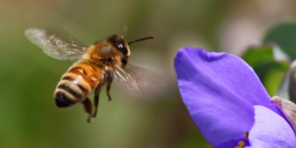 Σοκ: Γνωστός παρουσιαστής… πρήστηκε στο πρόσωπο από τσίμπημα μέλισσας