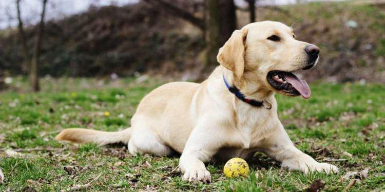 Ποιοι σκύλοι κινδυνεύουν περισσότερο να πάθουν θερμοπληξία το καλοκαίρι