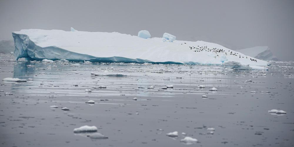 Βρέθηκε απολίθωμα αβγού 66 εκατ. ετών στην Ανταρκτική! [εικόνα]