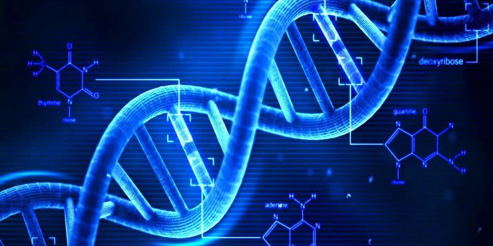Για πάντα νέοι και υγιείς: Επιστήμονες βρήκαν την πρωτεΐνη που προστατεύει τα κύτταρα από το στρες
