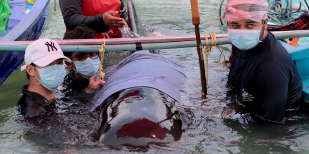 Φάλαινα πέθανε αφού κατάπιε 80 σακούλες!