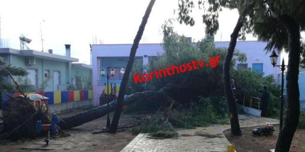 Παραλίγο τραγωδία σε νηπιαγωγείο στη Κόρινθο από πτώση δέντρου
