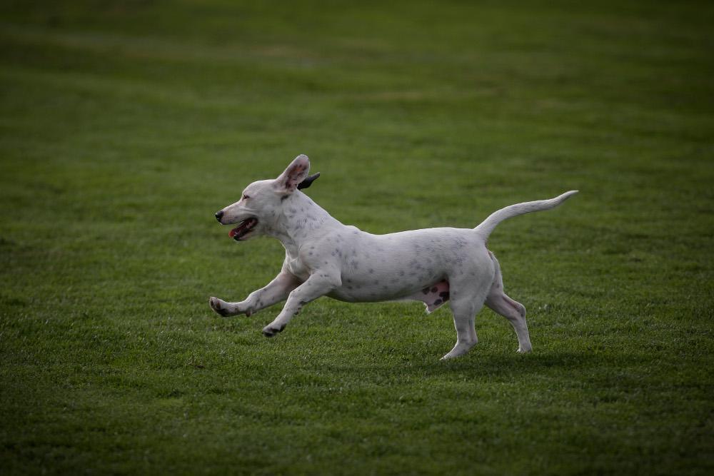 Μεγάλη προσοχή: Αυτές είναι οι 3 τροφές-θάνατος για τα σκυλιά!