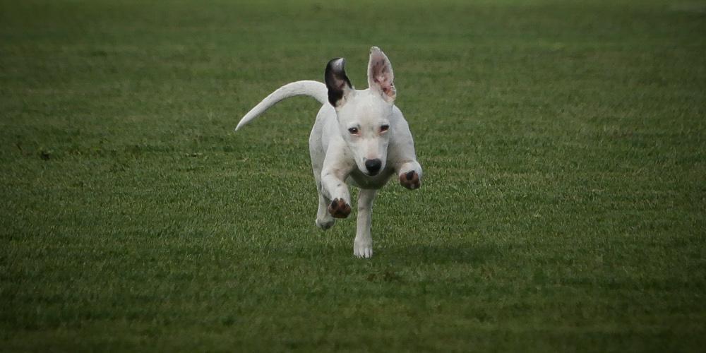 Σωτήριο αυτό το κόλπο: Σώστε τον σκύλο σας από φόλα με μαγειρική σόδα