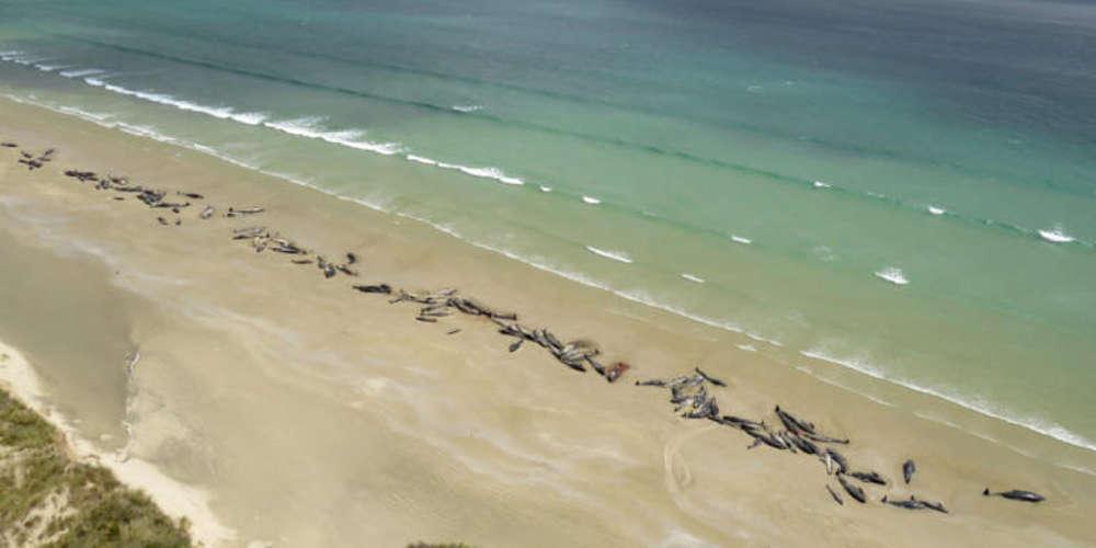 Αλτσχάιμερ και στα δελφίνια! Τι βρήκαν σε αυτά που εξόκειλαν σε παραλίες