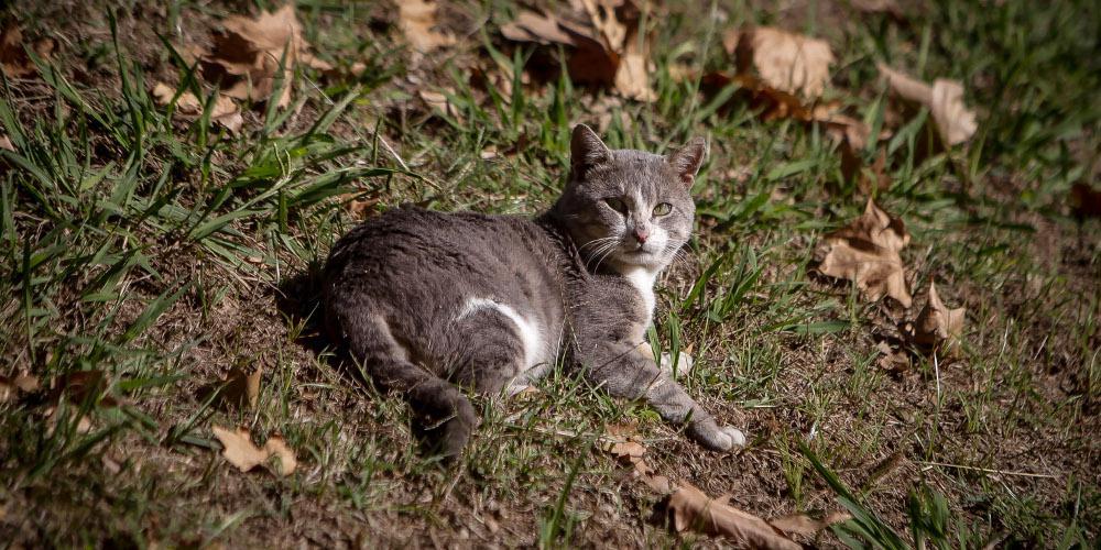 Αίσχος: Δηλητηρίασαν δεκάδες αδέσποτες γάτες στη Λαμία