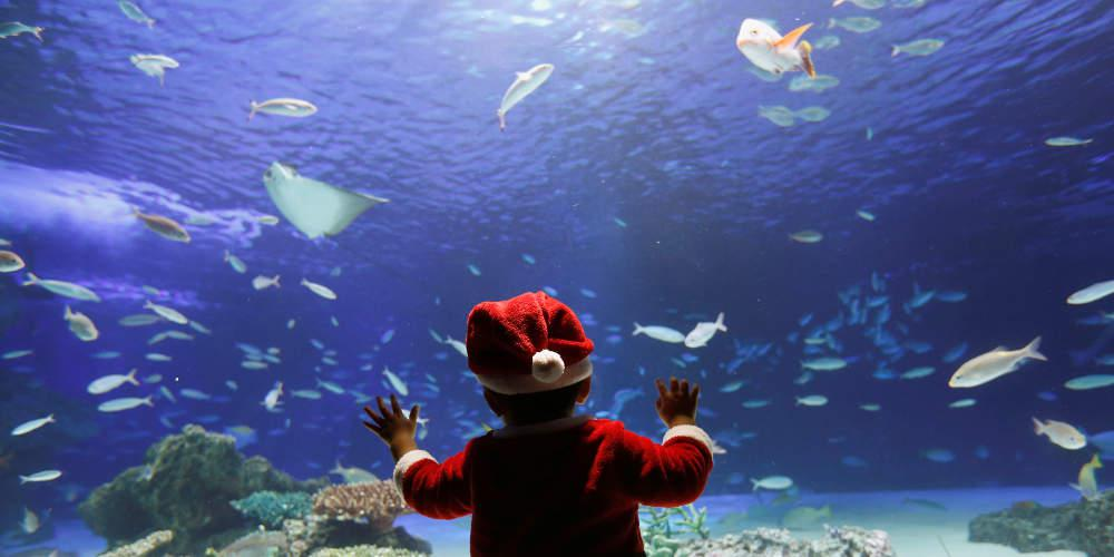 Απίστευτο βίντεο: Το ψάρι ρομπότ που οργώνει το βυθό