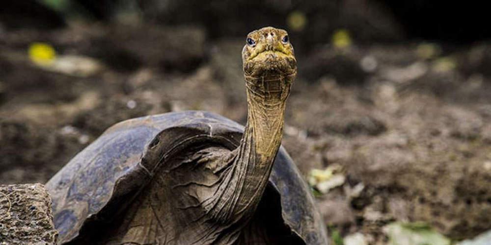 Πώς μια γιγάντια χελώνα βοηθά τους επιστήμονες να μελετήσουν τα μυστικά της μακροζωίας
