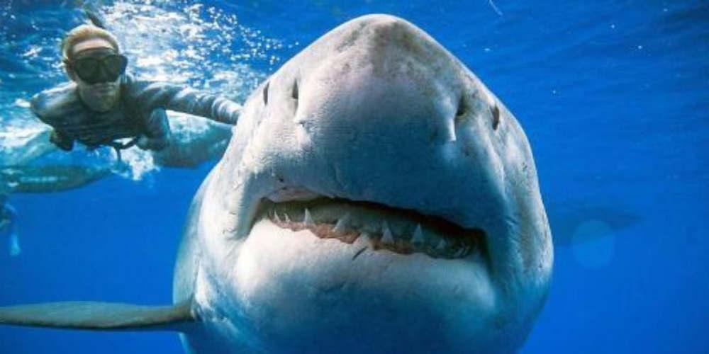 Δύτες κολύμπησαν δίπλα στον μεγαλύτερο λευκό καρχαρία που έχει θεαθεί ποτέ [βίντεο]