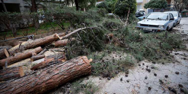 Καταπλακώθηκαν 12 οχήματα στη Νέα Σμύρνη από πτώση δέντρου από τον άνεμο