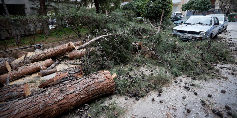 Ξεπερνά τα 100 εκατομμύρια ευρώ η καταστροφή από τον δάκο στην Κρήτη