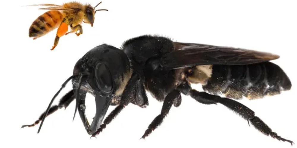 Πώς η κλιματική αλλαγή «χτύπησε» και τις μέλισσες