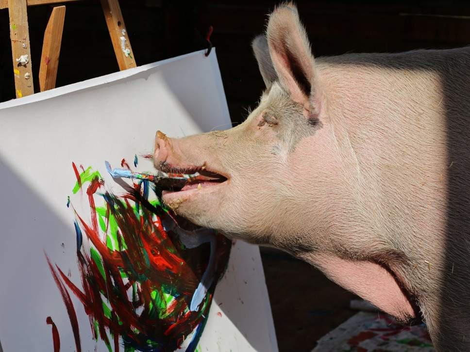 «Pigcasso»: Το ταλαντούχο γουρούνι που πουλάει πίνακες για χιλιάδες δολάρια [εικόνες]