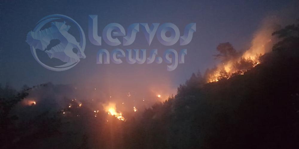 Μάχη με τις φλόγες στο Νεοχώρι στην Λέσβο [εικόνες & βίντεο]