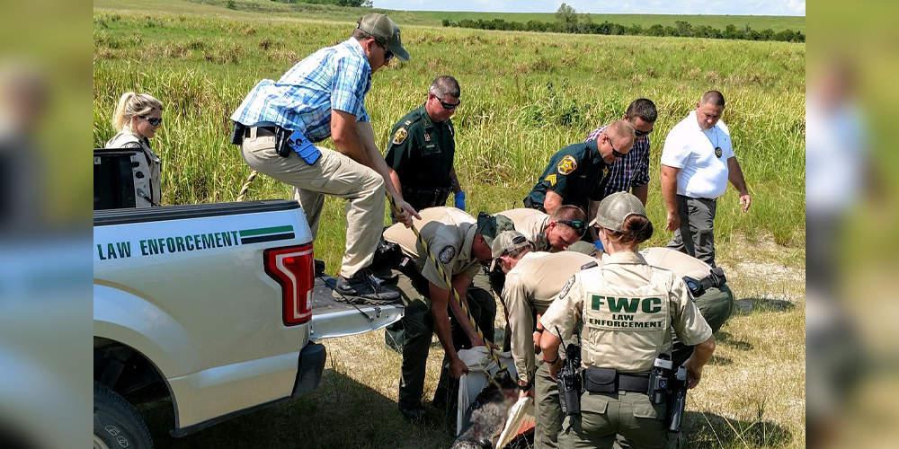 Σοκ στη Φλόριντα: Βρήκαν ανθρώπινα μέλη σε στομάχι αλιγάτορα [βίντεο]
