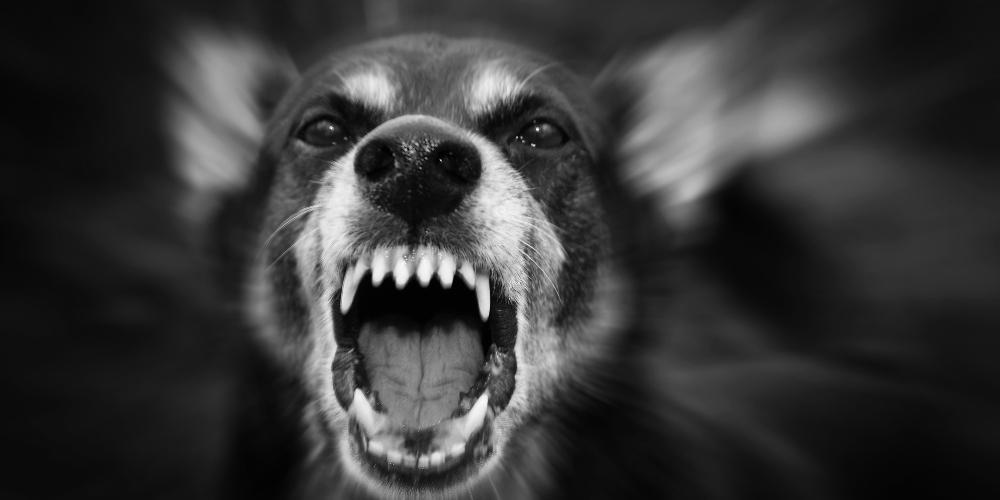 Θεσσαλονίκη: Επίθεση από αδέσποτο σκύλο δέχτηκε εικοσάχρονος