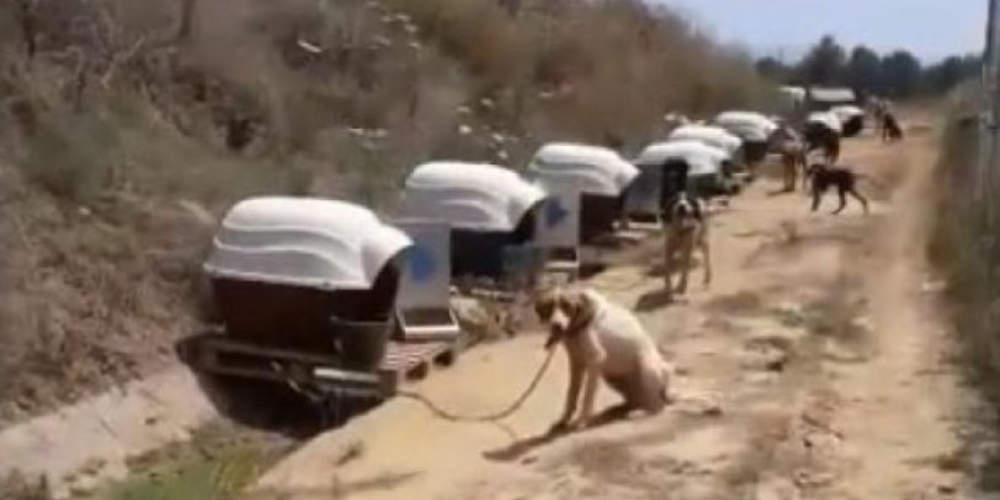 Σάλος στη Σπάρτη: Αδέσποτα μένουν αλυσοδεμένα εν μέσω καύσωνα σε δημοτικό χώρο [βίντεο]
