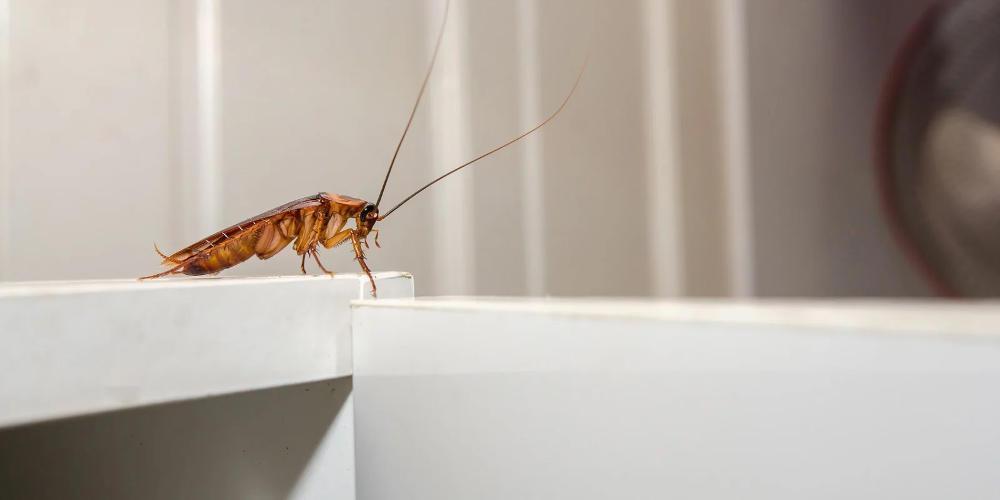 Κατσαρίδες στο σπίτι - Έτσι θα τις εξαφανίσεις με μαγειρική σόδα