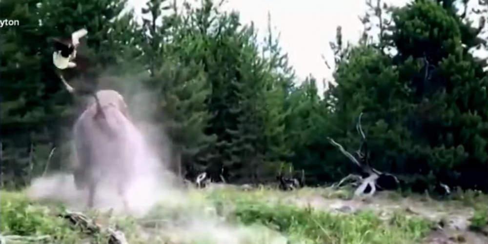 Βίντεο-σοκ: Βίσωνας 900 κιλών επιτίθεται σε 9χρονο κοριτσάκι [βίντεο]